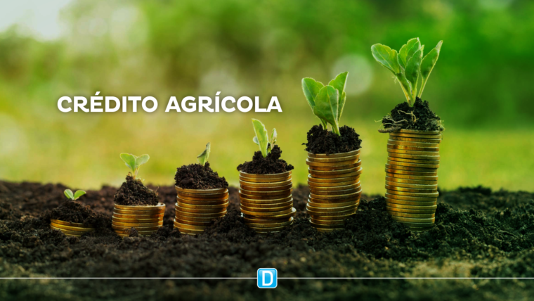 "Tereza Cristina: ""Vamos democratizar mais o crédito agrícola"""
