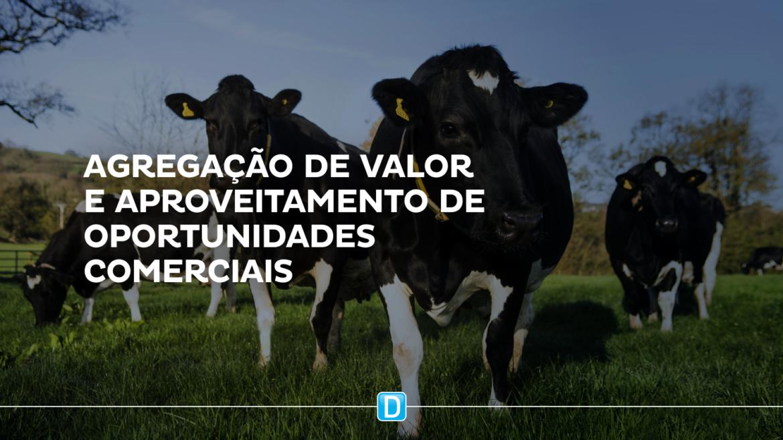 Avançam negociações para exportação de gado vivo para Laos