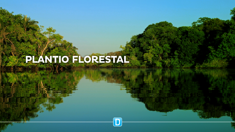 Ministério da Agricultura aprova Plano Nacional de Florestas Plantadas para fortalecer o segmento no Brasil