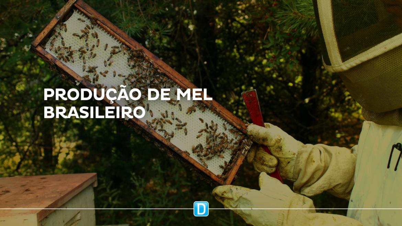 MDR investe R$ 51 milhões para profissionalizar produção de mel no Brasil