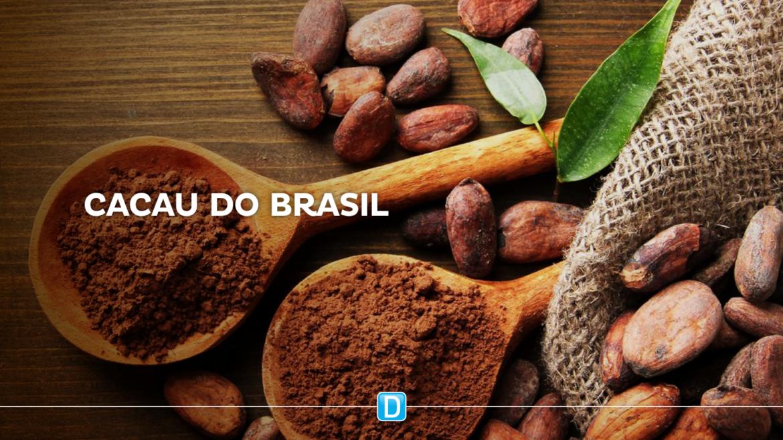 Brasil quer ganhar posições na produção mundial de cacau e chocolate