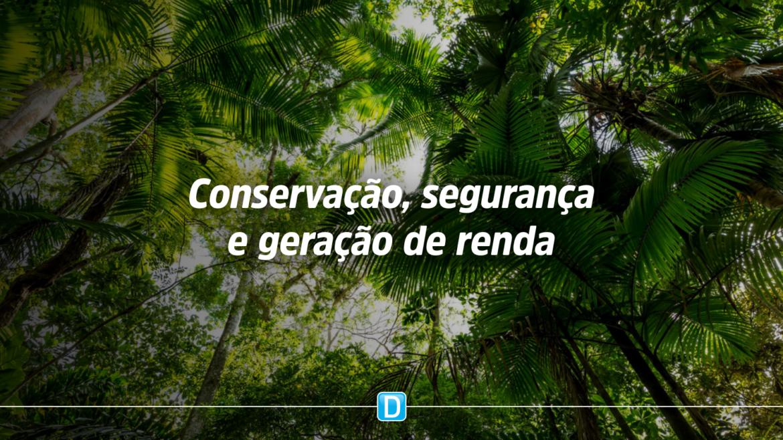 Serviço Florestal lança publicação sobre bioeconomia da floresta