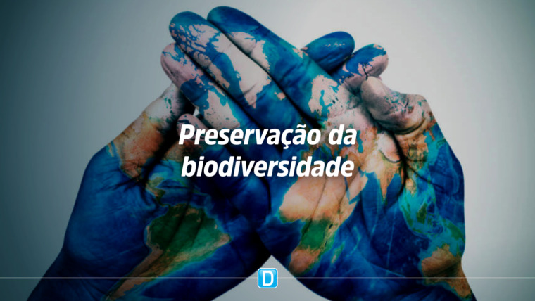 Empreendedora do Pará desenvolve sistema produtivo com fruto amazônico