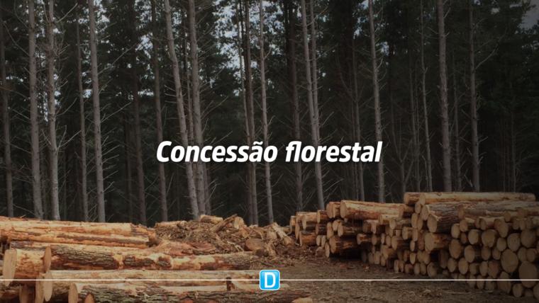 Governo Federal inclui concessão florestal no portfólio de prioridades do PPI