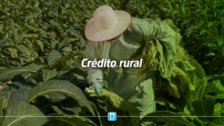 Contratação de crédito por pequenos e médios agricultores continua em crescimento na safra 2019/2020