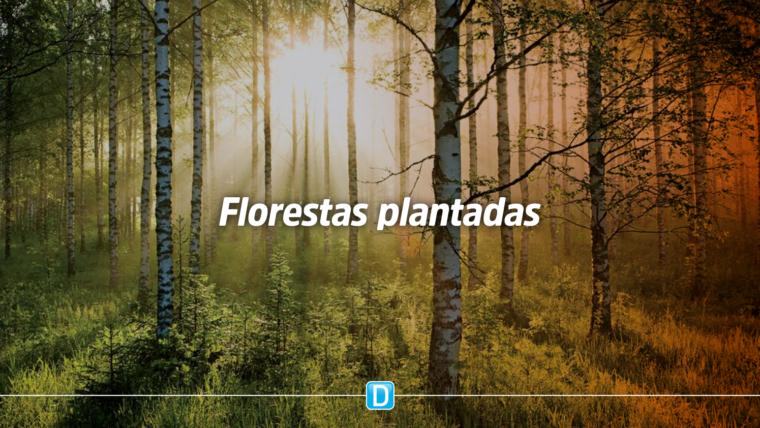 Mapa desenvolve programa para estimular a área de florestas plantadas no território nacional