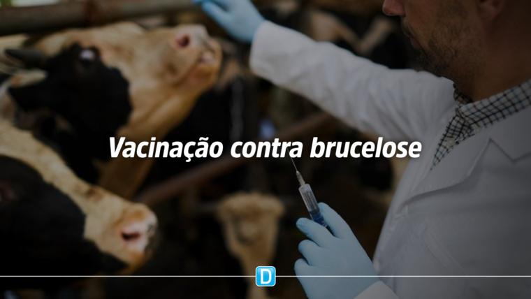 Cadastramento de médicos veterinários para a vacinação contra brucelose já pode ser feito on-line
