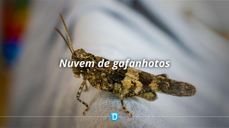 Onda de frio paralisa nuvem de gafanhotos e facilita combate na Argentina
