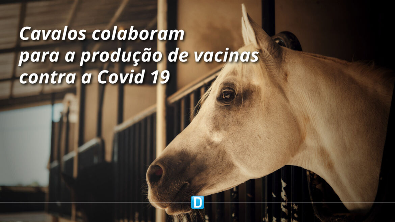 Brasil terá soro contra a COVID-19 a partir de cavalos