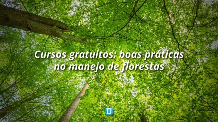 Juventude: Cursos gratuitos do Serviço Florestal Brasileiro estão com inscrições abertas