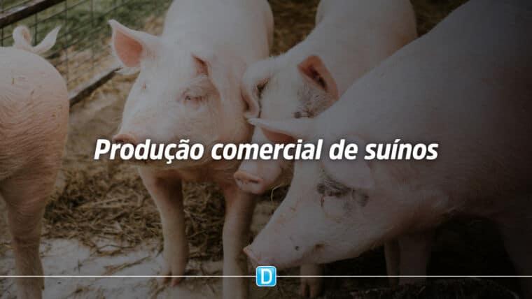 Norma estabelece as boas práticas de manejo na produção comercial de suínos
