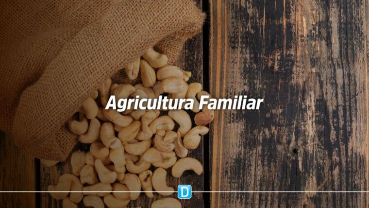 Agricultura Familiar: Castanha de caju e banana estão entre os produtos com bônus em fevereiro